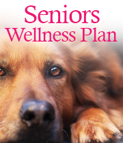 Seniors Wellness Plan