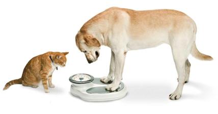 Pet Weight Loss Clinic