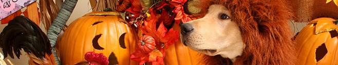 pet safe halloween