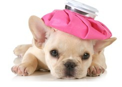 Can my pet get the flu?