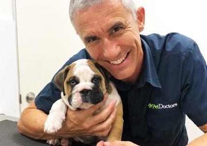 Pet Doctors Palm Beach   Your Gold Coast Vet