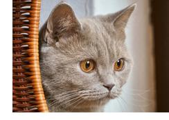 cat dental disease