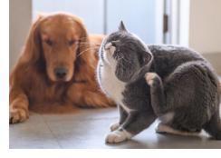 flea treatment for cats